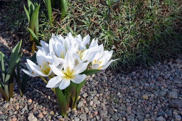 strax innanför grinden har du massor av iris