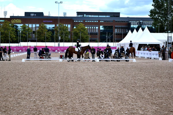 european championship horses gothenburg